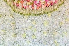 Colorful rose flower backdrop on background. Colorful rose flower backdrop on background Royalty Free Stock Image