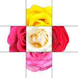 Colorful Rose Flower mosaic design Stock Photos