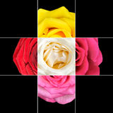Colorful Rose Flower mosaic design Royalty Free Stock Photography