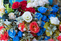 Colorful of rose flowers. Colorful of rose flowers for background or wallpaper Stock Photos