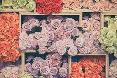 Colorful rose paper flower Royalty Free Stock Photos