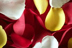 Colorful rose petal pattern wallpaper texture Royalty Free Stock Photos
