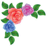 Colorful roses Royalty Free Stock Photos