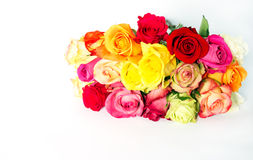 Colorful roses, beautiful flower bouquet Stock Images