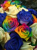 Colorful Roses. Beautiful colorful rose Royalty Free Stock Image