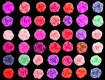 Colorful roses on black background. Royalty Free Stock Photos