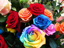 Colorful roses in bloom. Bouquet of blooming roses in bright, unusual colors Royalty Free Stock Photography