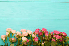 Colorful roses on blue wooden background royalty free stock photos