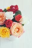 Colorful roses Stock Image