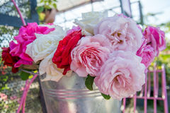 Colorful roses in a metal pot Royalty Free Stock Photos