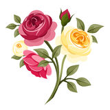 Colorful roses. vector illustration
