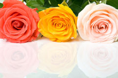 Colorful roses on the reflecting surface Royalty Free Stock Photos