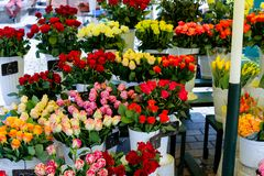 Colorful roses in vases in flower shop. stock image