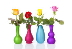 Colorful roses in vases over white background Royalty Free Stock Images