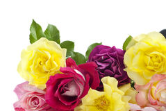 Colorful Roses White Background. Colorful home grown roses horizontal with white background Stock Images
