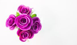 Colorful roses on the white. Rose, white background, decorated the background Royalty Free Stock Photos