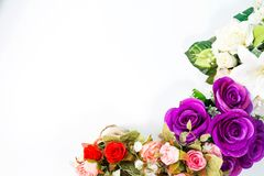 Colorful roses on the white. Rose, white background, decorated the background Royalty Free Stock Image