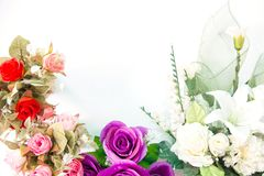 Colorful roses on the white. Rose, white background, decorated the background Stock Image