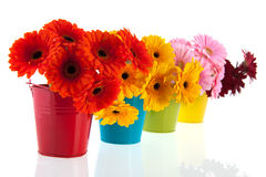 Colorful row with Gerber flowers Royalty Free Stock Photos