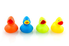 Colorful rubber ducks. A variety of colorful rubber ducks isolated on white background stock photography