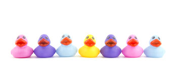 Colorful rubber ducks in an open line Royalty Free Stock Photos