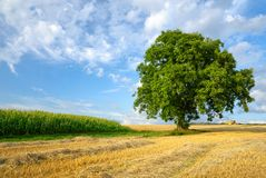Colorful rural landscape Royalty Free Stock Photos
