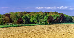 Colorful rural landscape with green fields Royalty Free Stock Photography