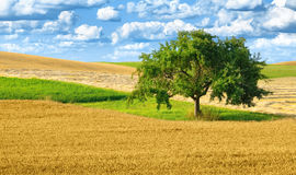 Colorful rural landscape with single tree Royalty Free Stock Images