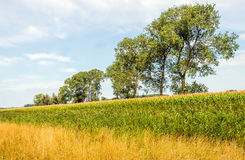 Colorful rural landscape in the summer season Royalty Free Stock Photography