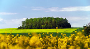 Colorful rural landscape with yellow bittercress fields Royalty Free Stock Photos