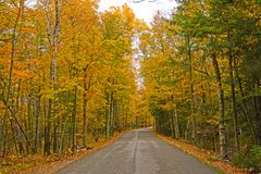 Colorful Rural Road in the Fall. In Potawatomi State Park in Wisconsin Royalty Free Stock Image