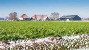 Colorful rural winter landscape. Green vegetation in a Dutch winter landscape Stock Image