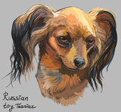 Colorful Russian long-haired toy Terrier vector hand drawing. Vector colorful outline portrait of Russian long-haired toy Terrier, hand drawing Illustration on Stock Image