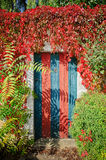 Colorful rustic door covered by lianas Royalty Free Stock Photography