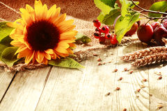 Colorful rustic Thanksgiving background Stock Image