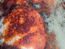Colorful of rusty metal. Texture Royalty Free Stock Photo
