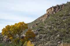 Colorful Sabino Canyon Royalty Free Stock Image
