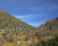 Colorful Sabino Canyon Royalty Free Stock Photography