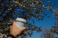 Hand with paper cup of coffee - Colorful sakura cherry blossom in a park in Riga, Eastern European capital city of royalty free stock photos