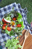 Colorful salad bowl put on grass Stock Images