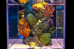 The colorful salt water fish tank stock photo