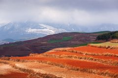 Colorful scenic landscape of Red Land at sunrise, snow mountains and clouds backgrounds. The sun shines down around terraced wheat royalty free stock photo