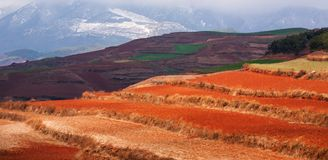 Colorful scenic landscape of Red Land at sunrise, snow mountains and clouds backgrounds. The sun shines down around terraced wheat royalty free stock images