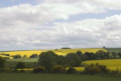 Colorful Scottish farmland. Scottish farm land brightly lit showing the bright yellow rapeseed flowers contrasting with the green fields stock images