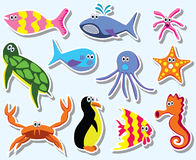 Colorful sea animals Royalty Free Stock Images