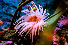 Colorful sea creatures. Colorful and beautiful sea creatures in seattle aquarium. they look like great artworks royalty free stock images