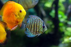 Colorful sea fish in the aquarium Royalty Free Stock Photo