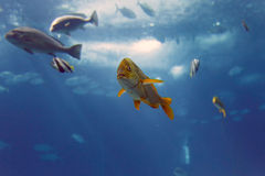 Colorful sea fish Stock Images