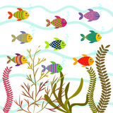 Colorful sea fishes. Underwater nature vector. Royalty Free Stock Photography