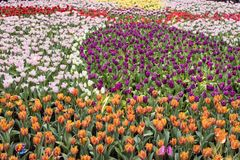 Colorful Sea of flower to relax royalty free stock photo